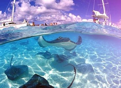 Stingray City, The Grand Cayman Islands