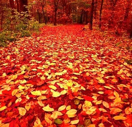 Autumn Forest Path, Finland