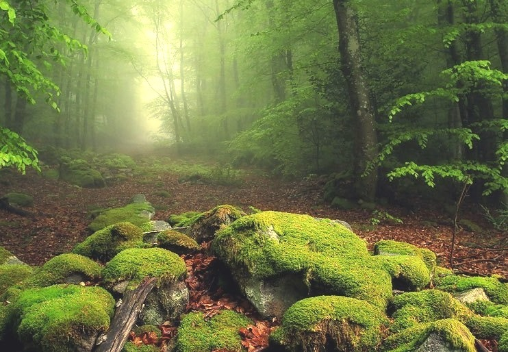 Magical Forest, France